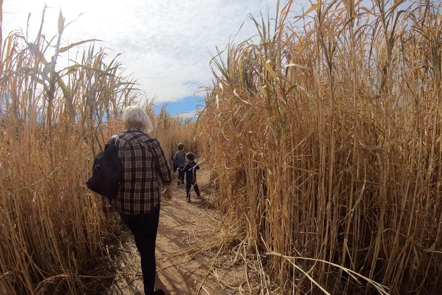 Corn Maze Marble Falls