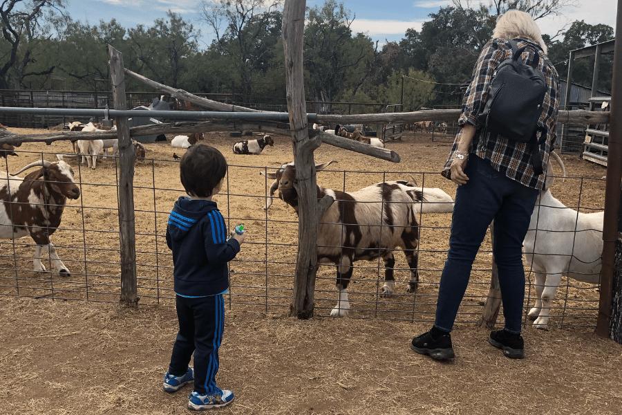 goats marble falls